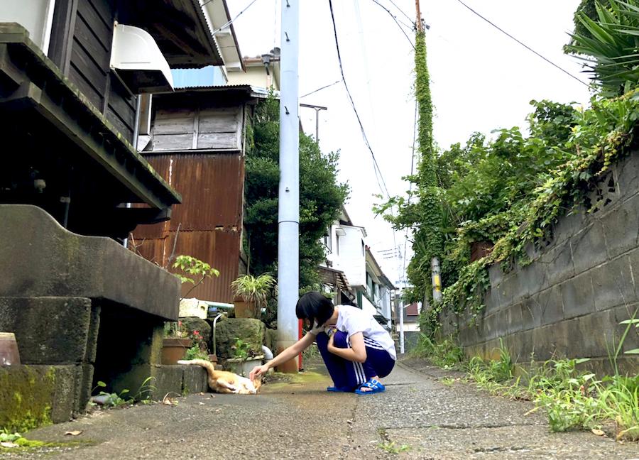 稲取の日常 〜路地と猫〜
