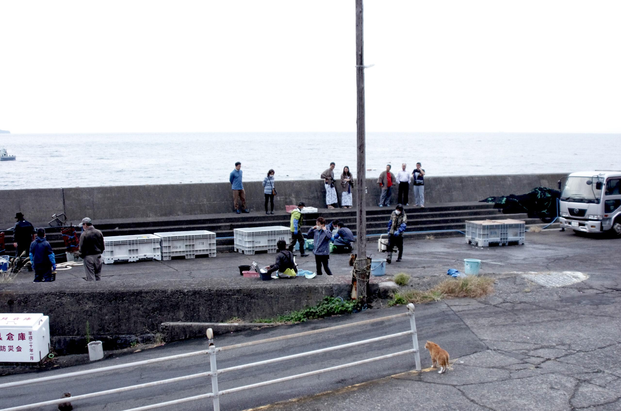 新滞在コンテンツ「お魚買付けツアー」発表!!